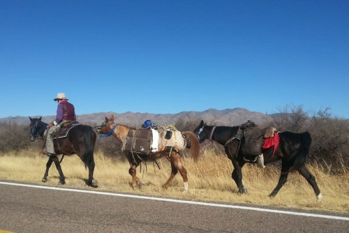 Saw this old cowboy traveling down Hereford Rd. with his packhorses.