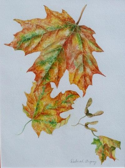 Maple Leaves  9 x 12 watercolor on paper  © Debra Argosy