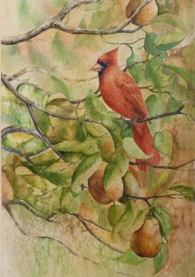 Cardinal in the Pear   11 1/2  x 7 1/2 watercolor on paper © Debra Argosy